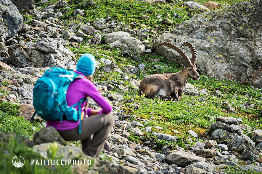 A female backpacker stands looking at an ibex while hiking in the Swiss Alps