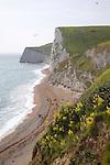 Chalk cliffs and beach west of Durdle Door, Dorset, England to Bat's Head headland