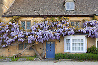 United Kingdom, England, Worcestershire, Broadway: Wisteria fronted cottage | Grossbritannien, England, Worcestershire, Broadway: Cottage mit bluehenden Glyzinien - auch Blauregen genannt