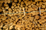 Clothes pins on line with fire wood background.