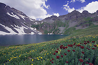 Clear Lake with wildflowers in alpine meadow,Ledge Stonecrop,Rhodiola integrifolia,Alpine Avens, Ouray, San Juan Mountains, Rocky Mountains, Colorado, USA