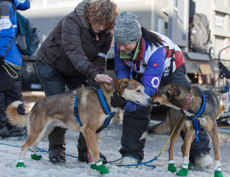 Yuka Handler and a volunteer hook up Honda's sled dogs at the ceremenial start of the 43rd Annual Iditarod in Anchorage, Alaska. The 1000 mile dog sled race usually restarts in Willow, Alaska, and finishes in Nome. Poor snowfall, however, forced the restart north to Fairbanks.