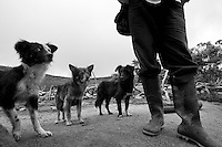 Faithful dogs by their Arhuaco owner. Sierra Nevada de Santa Marta, Colombia.