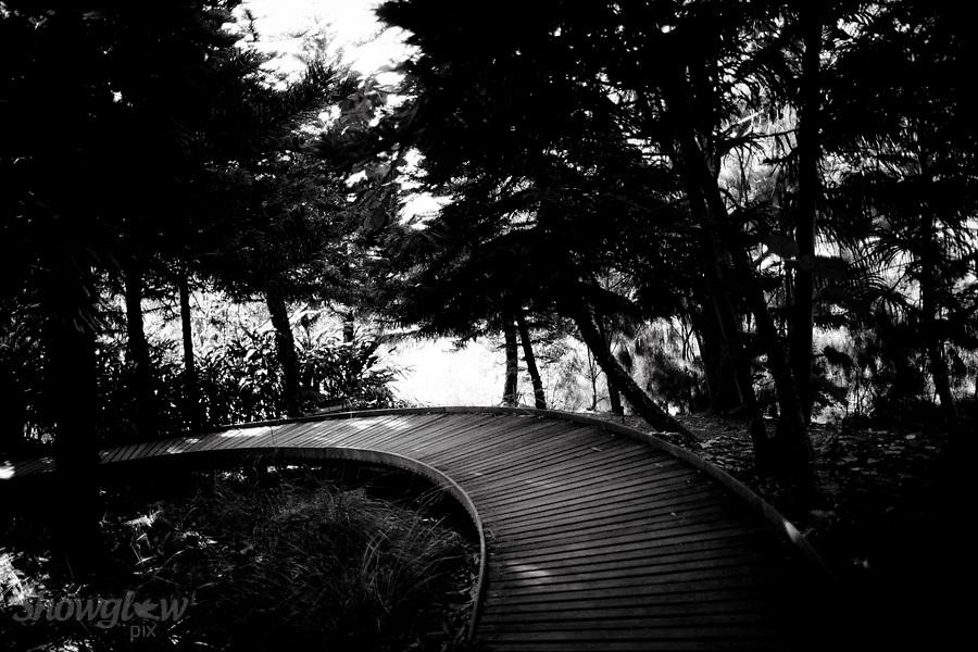 Image Ref: M281<br /> Location: Royal Botanical Gardens, Melbourne<br /> Date: 03.06.17