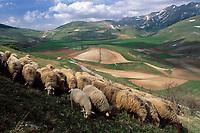 Italien, Umbrien, Schafherde auf einer Hochebene in den Sibillinischen Bergen  Italy, Umbria, tableland at the Sibillini mountains - sheep