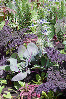 Kale Redbor in mixed vegetable and flower garden, Ricinus, Papaver, Eryngium