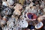 Boat shells & Bubbles