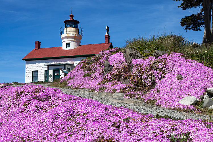 Iceplant blooms at the Battery Point Lighthouse which sits outside the Crescent City harbor along the Northern california coast. On December 10, 1856 the lighthouses original fourth order Fresnal lens first illuminated the night sky an remained active until the lighthouse was automated in 1953 and its original lens replaced by a modern 375 mm lens. Access to the onsite museum and lighthouse is accessible only at low tide across an exposed land bridge.