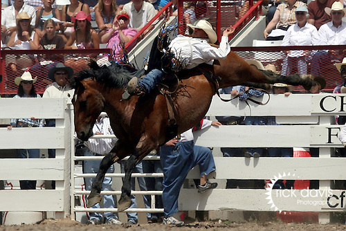 Cheyenne, Wyoming-7/26/2009-Photo by Rick Davis - PRCA bareback rider Jessy Davis of Payson, Utah, scores a thrilling 90 point bareback bronc ride on the bronc Brother during final round action at the 113th annual Cheyenne Frontier Days Rodeo.