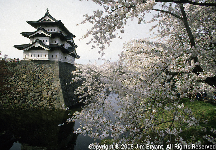 The historic landmark of the Hirosaki Castle provides a backdrop of many pictures at the Cherry Blossom Festival held in Oyo Park near Hirosaki Castle in Aomori Prefecture in Northern Honshu, Japan. Over 1500 cherry trees come into bloom from late April to Early May. (Jim Bryant Photo)........