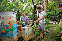 "Adam Johnson, 35 years old, associate lawyer in a New York law firm looks after four hives in a neighboring community garden. ""The New York City Beekeepers' Association to which I belong thinks there are about a hundred hives in New York. But, that's only counting our group and the known beekeepers. If you add people of Mexican and Puerto Rican origins, who have rural roots, and other groups of young people, the figures could get as high as 500 hives."""