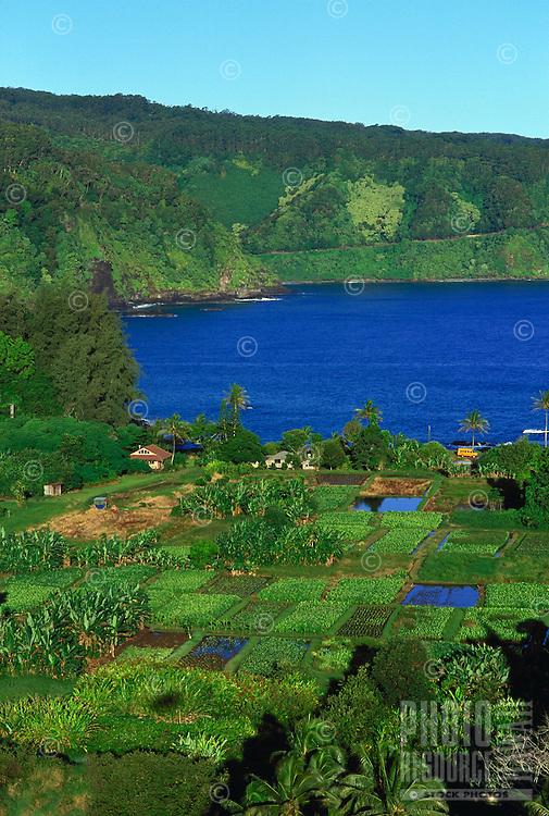 Aerial of Keane penisula with taro farms, Maui