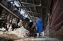 July 16, 2011- Dairy farmer Mr. Yoshida, 47 cleans his milking shed prior to milking in Hirata Village, Fukushima, Japan. ..Mr. Yoshida couldn't sell his milk for 40 days after the government ordered farmers on the 17th of March to cease selling milk at start of the crisis at the TEPCO Fukushima Daiichi Nuclear plant. Mr. Yoshida has received 50% of his income in compensation from TEPCO for March, April and May and loans from the farm association but is anxious about whether future compensation will come. He feels that TEPCO should also pay for feed so farmers don't have to pay.