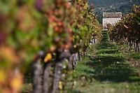 Europe/Europe/France/Midi-Pyrénées/46/Lot/Caillac: le vignoble AOC Cahors à l'automne et  cabanon de vigneron