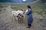 A Tsaatan settlement in Northern outer Mongolia Russian border.  A woman gives her reindeer salt.