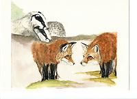Paar vorming Das (Melis melis) en Vos (Vulpes vulpes)
