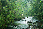 Tawau River flowing through lowland rainforest, Tawau Hills Park, Sabah, Borneo, Malaysia