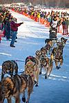 Peter Kaiser starting Iditarod 2014, Willow, Southcentral Alaska, Winter.