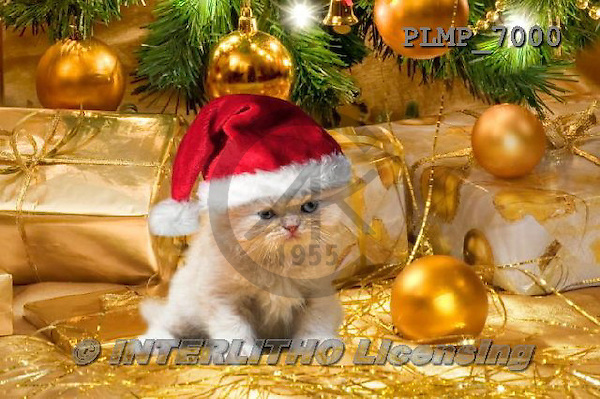 Marek, CHRISTMAS ANIMALS, WEIHNACHTEN TIERE, NAVIDAD ANIMALES, photos+++++,PLMP7000,#XA# cat  santas cap,