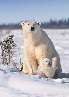 Mom keeps an eye out, while her cub is in play mode.
