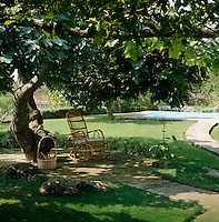 A wicker rocking chair has been placed in the shade of an ancient fig tree with the swimming pool beyond