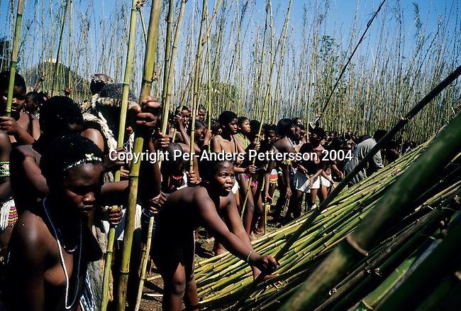 NONGOMA, SOUTH AFRICA - SEPTEMBER 11: Unidentified maidens place reeds at the Royal Palace during the annual Reed Dance on September 11, 2004 in Nongoma in rural Natal, South Africa. About 20.000 maidens from all over South Africa arrived to dance for Zulu King Goodwill Zwelethini at the Enyokeni Royal Palace in Kwa-Nongoma about 350 kilometers from Durban. The girls come to the kingdom to declare their virginity and the ceremony encourages girls and young women to abstain from sexual activity to curb the spread of HIV-Aids..(Photo: Per-Anders Pettersson).....
