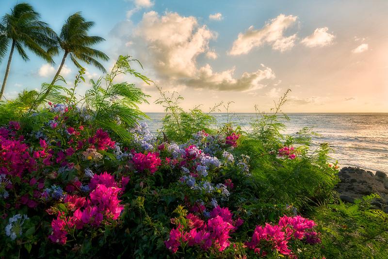 Flowers and coastline with sunset. Kauai, Hawaii