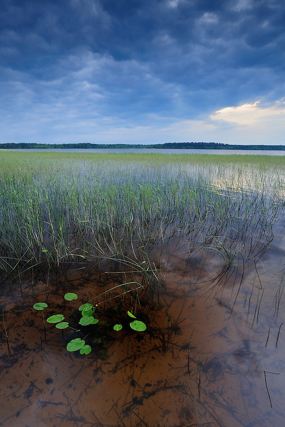 Moricsala Strict Nature Reserve, Moricsala Island, Lake Usma, Latvia