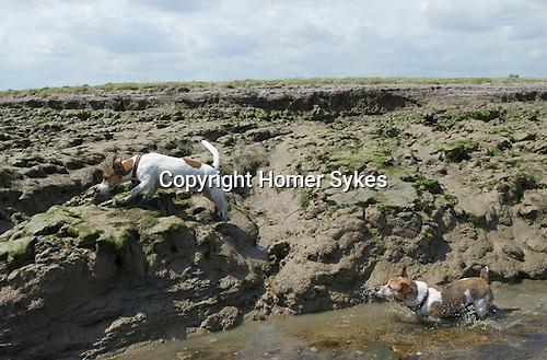 Breendan and Apricote Bradwell on Sea Essex 2009.