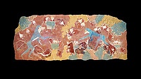 The Minoan 'Saffron Gatherer' wall art fresco, from 'House of Frescoes' Knossos Palace. 1700-1450 BC. Heraklion Archaeological Museum. Black Background. <br /> <br /> The 'Saffron Gatherers' fresco depicts a blue monket gatering saffron crocuses and placing them in a basket. The saffron is thought to have been a gift to the 'Great Goddess'. One of the earliest frescoes from Knossos.