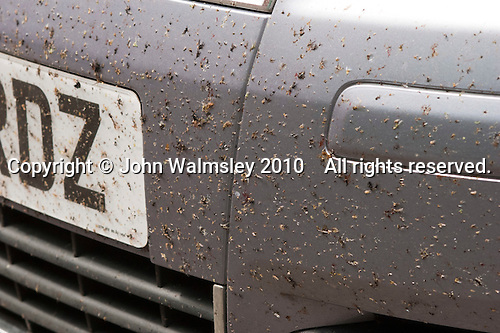 Swarm of dead flies splattered across the front of a car.  They were kiilled by the car hitting them at speed.