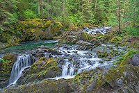 ORCAN_D121 - USA, Oregon, Willamette National Forest, Opal Creek Scenic Recreation Area, Multiple small falls and swift flow of Opal Creek with surrounding old growth forest.