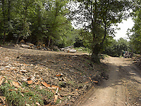 FOREST_LOCATION_90009