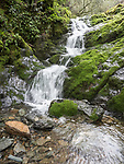Spring waterfall, Murphy Gulch, Amador County, Calif.