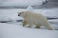 2012 July - Svalbard