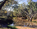 Bulloo River with River Red Gums (Eucalyptus cmaldulensis), in flood, Channel Country, Queensland.