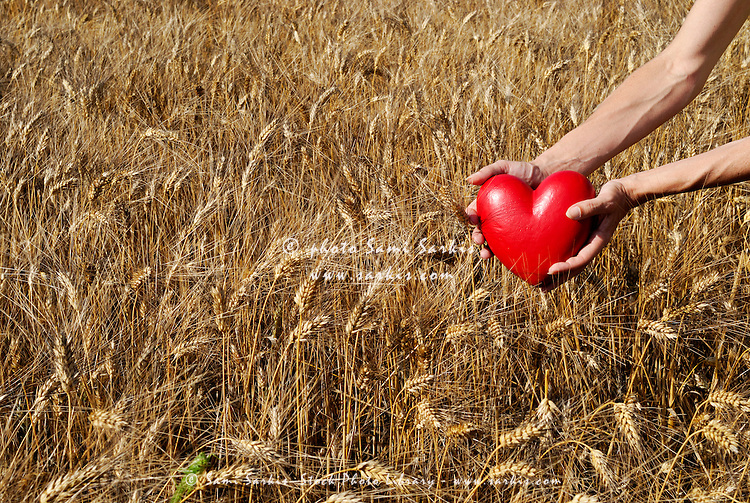 Woman in wheat field holding heart shaped object, view of hands
