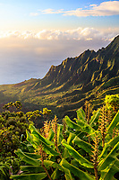 Sunset glows over Kalalau Valley, seen above kahili ginger plants along the Pihea Trail, Kaua'i.