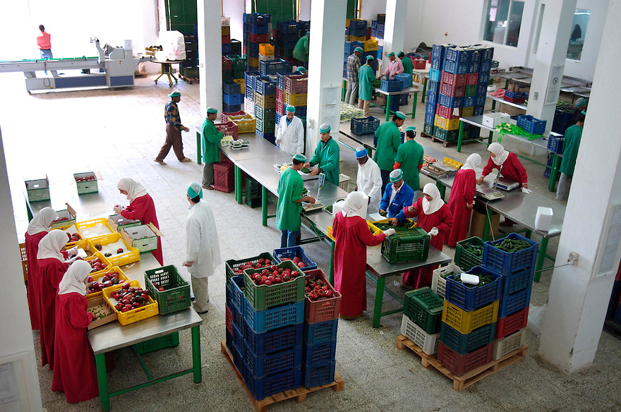 Egypte, Belbeis, 6 mei 2007..Sekem.    HATOR  - Fresh Organic ProductsFoto (c) .Verse biologische producten.Michiel Wijnbergh.
