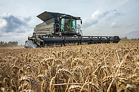 Fendt IDEAL 8T combine  harvesting wheat - Lincolnshire, August