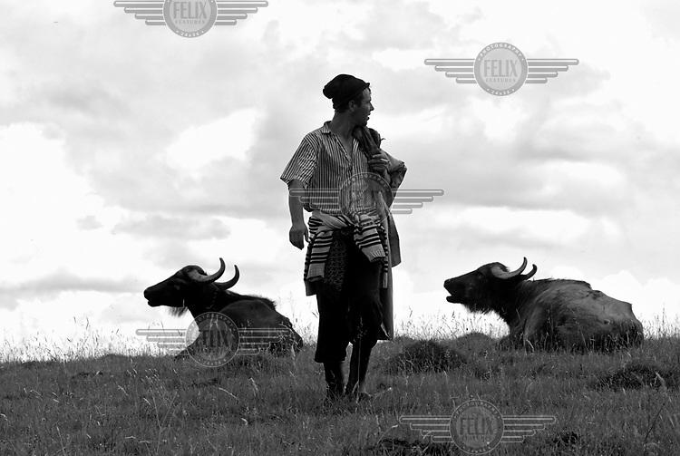 A shepherd stands between two bulls in Ocna Sugatag, Maramures.