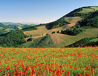 Italy, Marche, landscape near Urbino