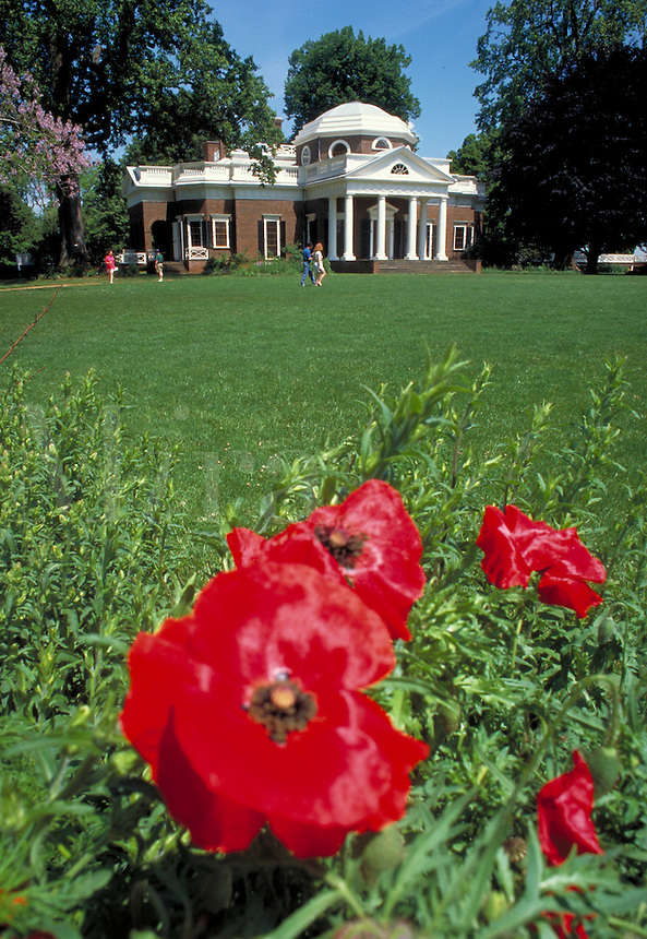 Red pansies bloom along the path traced on the front lawn of Monticello, President Thomas Jefferson's house or home. Trees are visible behind the house. Charlottesville Virginia, Monticello.