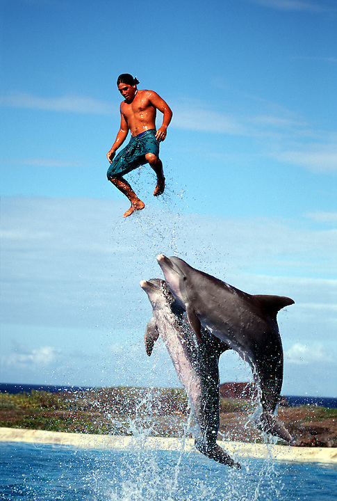 A public dolphin show with Atlantic Bottlenose Dolphin, Tursiops truncatus, Hawaii.
