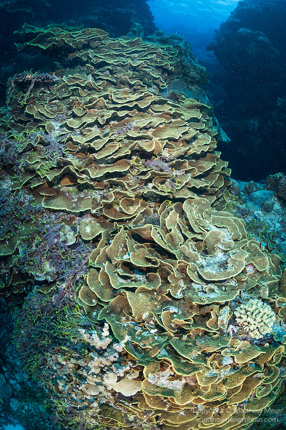 Great Barrier Reef, Australia; massive hard coral formations at Dungeons and Dragons