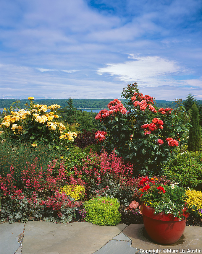 Vashon Island, WA: Summer perennial garden of roses, heuchera, barberry, sedges and boxwood overlookingQuartermaster Harbor