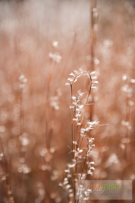 Grassy meadow, Round Valley Reservoir, Hunterdon County, New Jersey