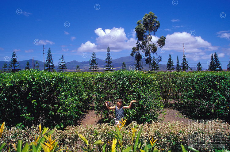 Young eight year old boy running through Dole's worlds largest maze on Oahu North shore