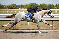 #63Fasig-Tipton Florida Sale,Under Tack Show. Palm Meadows Florida 03-23-2012 Arron Haggart/Eclipse Sportswire.
