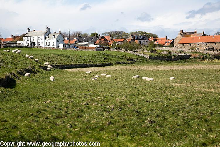 Village buildings, Holy Island, Lindisfarne, Northumberland, England, UK